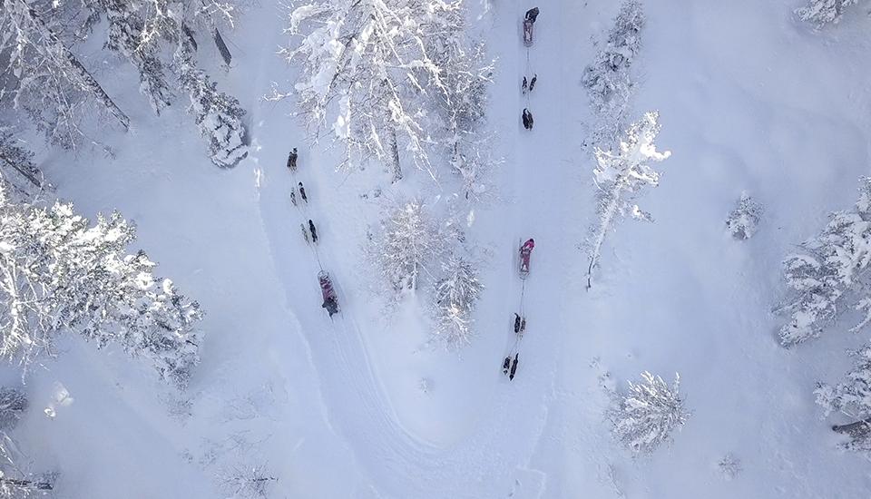 il percorso dello sleddog del Husky Village in valtellina tra bormio e livignoo