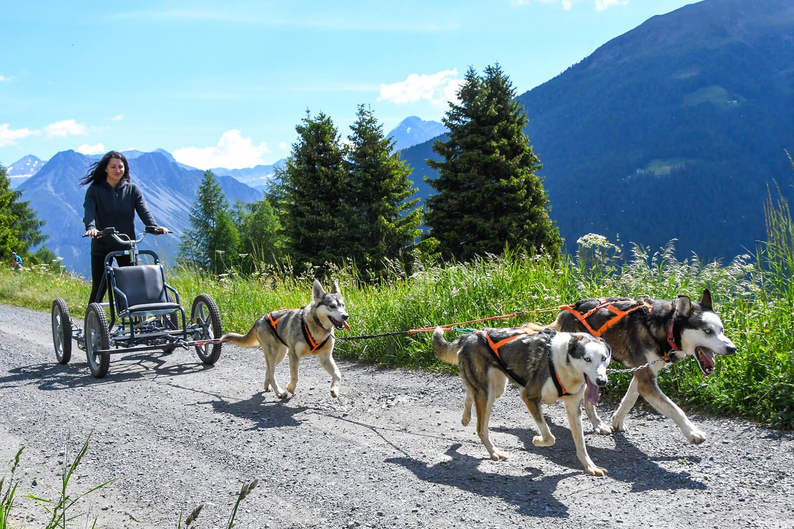 trekking estivo con gli husky