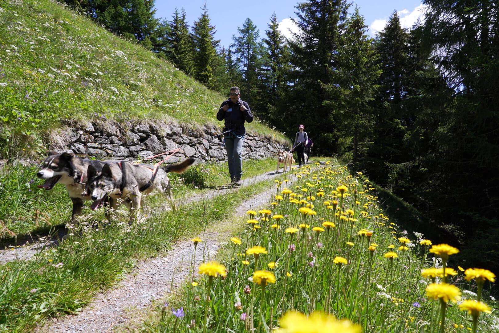 trekking con husky firmato Husky Village