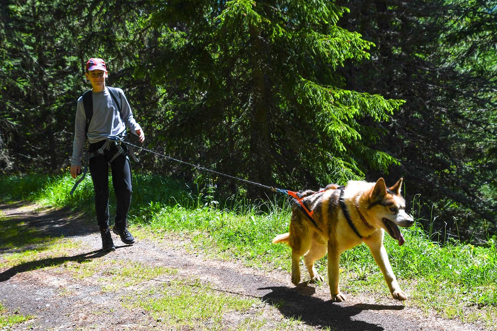 trekking con husky in valtellina sulle alpi