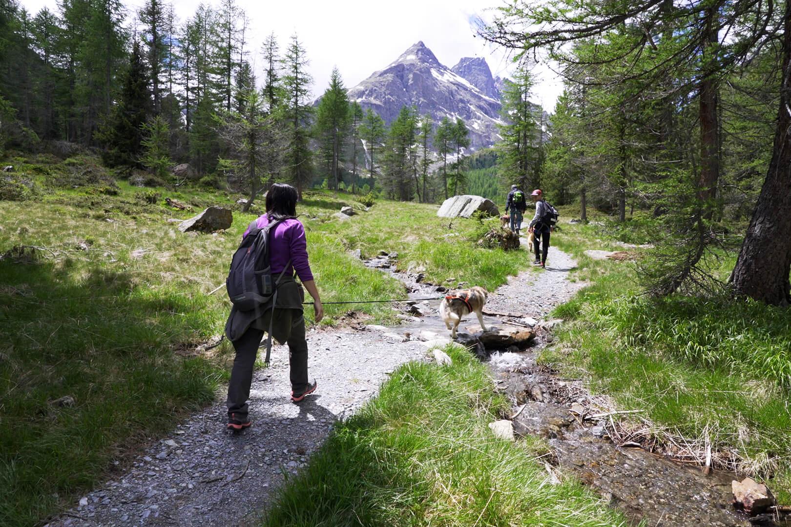 escursione fra i boschi con i cani husky