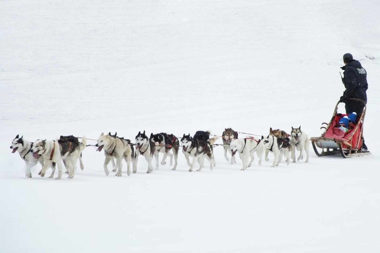bambini sulle slitte trainate dai cani in Valetllina
