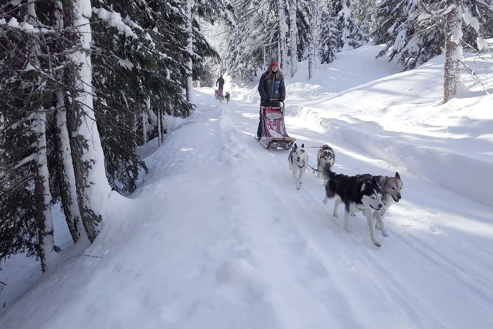 sleddog sulle alpi