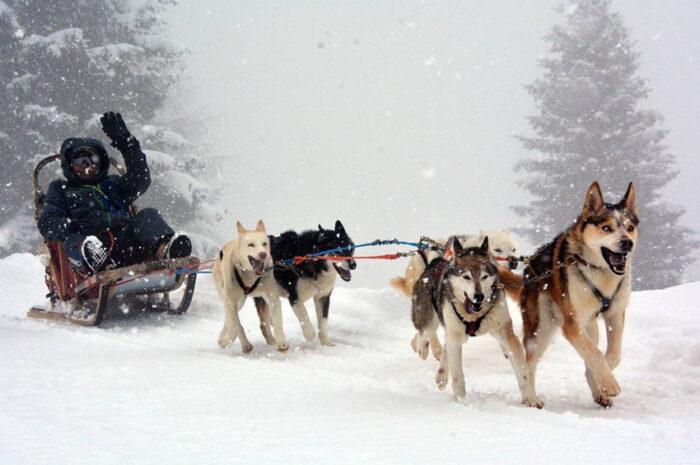 slitta trainata dai cani all'Husky Village